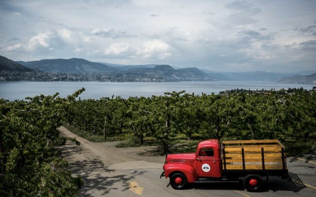 Vintage red truck in the orchards at Elephant Island winery